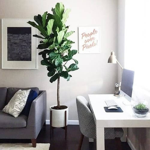 Best indoor trees to relax and productive