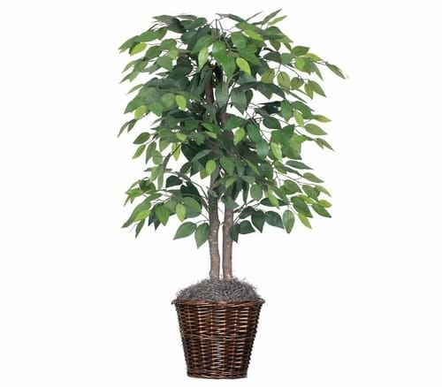 Vickerman artificial natural ficus bush indoor tree
